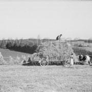 Auf dem Felde bei der Getreideernte