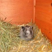 Blackbarry im Alter von einem Monat