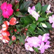 Bunte Blüten-Vielfalt, die Herz und Gemüt erfreuen