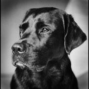 2. Platz Kategorie Tierporträt