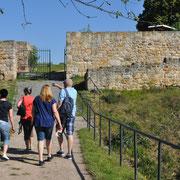 Auf den Weg zur Ruine Mühlburg 377 Meter ü.M.
