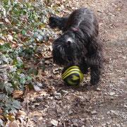 Und das bin ich, Ella , beim wilden spielen!