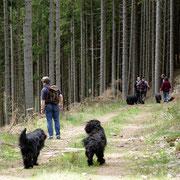 Hier gehts mal los in den Wald