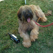 Briard in NOT !!!!