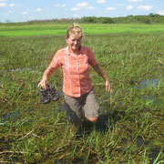 im Sumpf auf der Suche nach der Anakonda