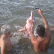 rosa Flußdelphin