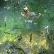 Schnorcheln unter hunderten Fischen