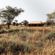 The Whisper Serengeti