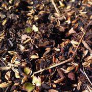 寝かせておいた腐葉土を苗床に。上に籾殻くん炭をぱらぱらと。