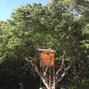 可愛らしいツリーハウス