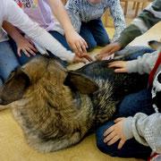 Therapiehund Fadrin