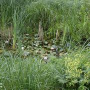 Mehrere Tümpel sind im NABU-Naturgarten vorhanden