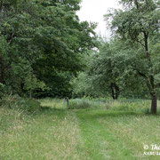 Alte Hochstammbäume im NABU-Naturgarten
