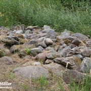 Ein Steinhaufen für wärmeliebende Insekten und Reptilien/Eidechsen