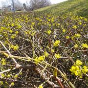 Frühlingserwachen K4