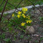 Frühlingserwachen K1