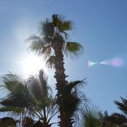 Der einzige Schutz vor der Sonne, 40°C im Schatten