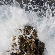 Aktion ! Wir haben uns in die Wellen geschmissen, Fische und viele Weitere Meereslebewesen besucht