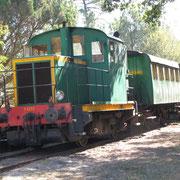 Arrivée en train historique sur le site de Marquèze dans la forêt