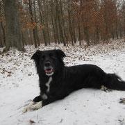 Faye im Schnee
