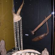 Muséum d'Histoire Naturelle Perpignan