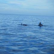 イルカ多い…毎年毎年…でもイルカウォッチングもたまにはGood!