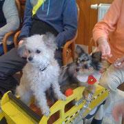 Lilly & Merliah im Streicheltaxi