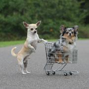 Im Einkaufswagen sitzen bleiben