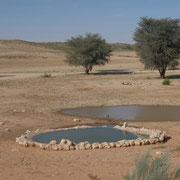 Wasserloch im Kgalagadi Transfrontier Park