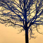 Winterbaum in Kehdingen. Foto: ©Rita Helmholtz