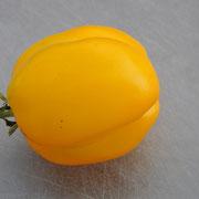 TOM 042 PSR Vincent / Pflanze mit unbegrenztem Wachstum. Frucht in Form einer blockigen Paprika, gelb, gross. Sehr widerstandsfähig gegen das Aufrollen der Blätter.