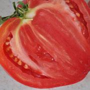 Tom 068 PSR Di Catenna / sehr grosse, fleischige Tomate (- 500gr.) / Ertragreich