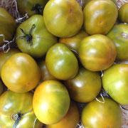 TOM TOM 084 PSR Lime Green / hoher Ertrag an süssen, saftigen Früchten, seit 1880 in D bekannt