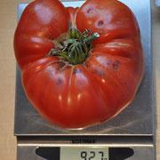 TOM 026 PSR Richard aus Magden / Riesig (800-900 gr.) grosse, schön geformte, roteFleischtomate. Mittelspät bis spät reifend. Platzt weniger auf als andere Fleischtomaten.