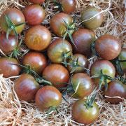 TOM 041 Black Cherry /  reichtragend, violettschimmernde Cherrytomate
