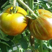 TOM 012 PSR Black Prince / Große, dunkle Tomaten, sehr guter aromatisch-würziger Geschmack, saftige Früchte, wohlschmeckende und ertragreiche Sorte.