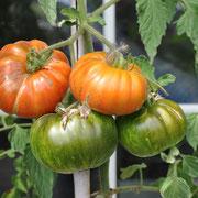TOM 064 Queen Anna / Gute Salattomate ca. 140-180 Gr. Rot-Orange-Braun gestreifte Früchte. Sehr selten. Ursprung aus den USA.