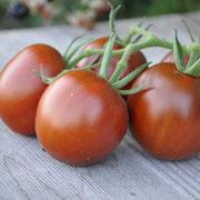 TOM 016 PSR Black Plum / Pflaumenförmige Tomate, 2- bis 3-kammerig, von dunkelbrauner Farbe mit dunkelrotem Stich. Dunkles Fruchtfleisch, köstlicher Geschmack, leicht süss. Massenträger (12 bis 15 Früchte à 50 g pro Stand).
