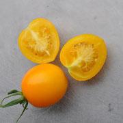 TOM 035 Gelbe Baumtomate / De Berao stammt aus Russland und gilt in vielen Teilen als sehr robust gegen Braunfäule. Sehr wüchsig (bis 4 m.)