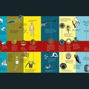 Focus zum Thema Bionik