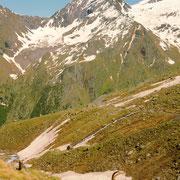 Bouquetin des Alpes - Grand Paradis (Italie) - Juin 2018
