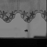Rainette verte - Oléron (17) - Août 2014