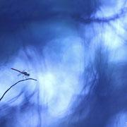 Sympétrum de fonscolombe - Luynes (13) - Juillet 2015