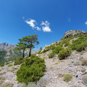 Corse - Août 2015