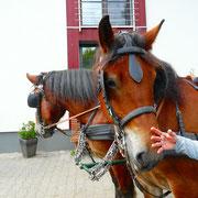 Ferien auf dem Bauernhof in der Eifel mit Kutschfahrt