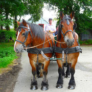 Bauernhofferien in der Eifel mit Kutsche