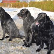 v.l.n.r. Raven, Charly und Basko