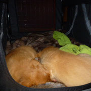 Beide gehen alleine in ihre Transportbox zum Schlafen