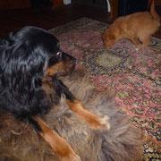 Rudi ist freundlich und ganz ruhig. Das ist Super!