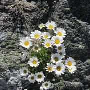 ....und und die Blumenpracht